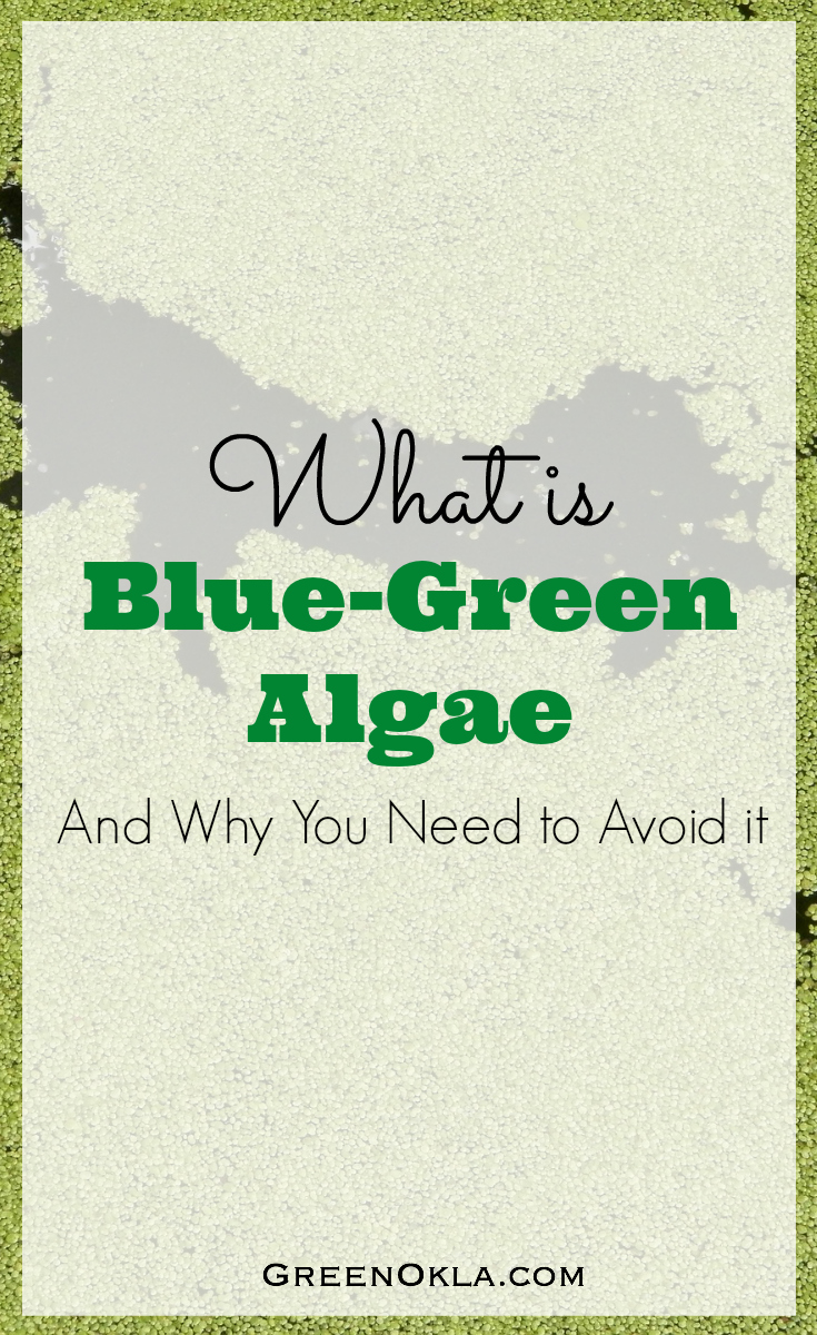 Blue green algae, what it is and why you need to avoid it
