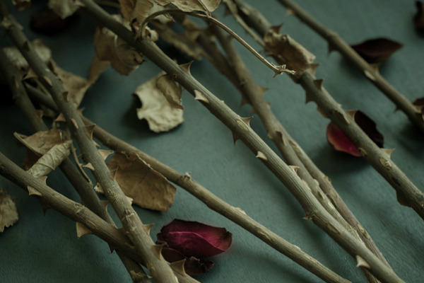 Few plucked rose petals scattered along with stems of rose flower bouquet.