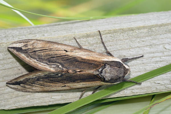 Get Rid of Moths with Natural Alternatives to Mothballs