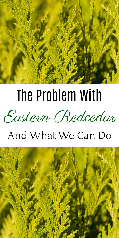 The Problem with Eastern Redcedar, Red Cedar, Cedar Fever, Oklahoma Cedar