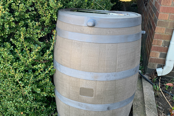 rain barrel next to house and bushes