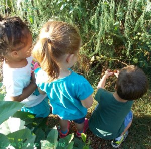 Gardening With Kids, Why It's Important