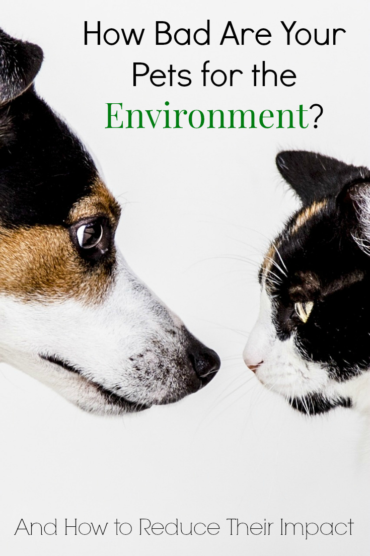 How bad are your pets for the environment? They can be greener!