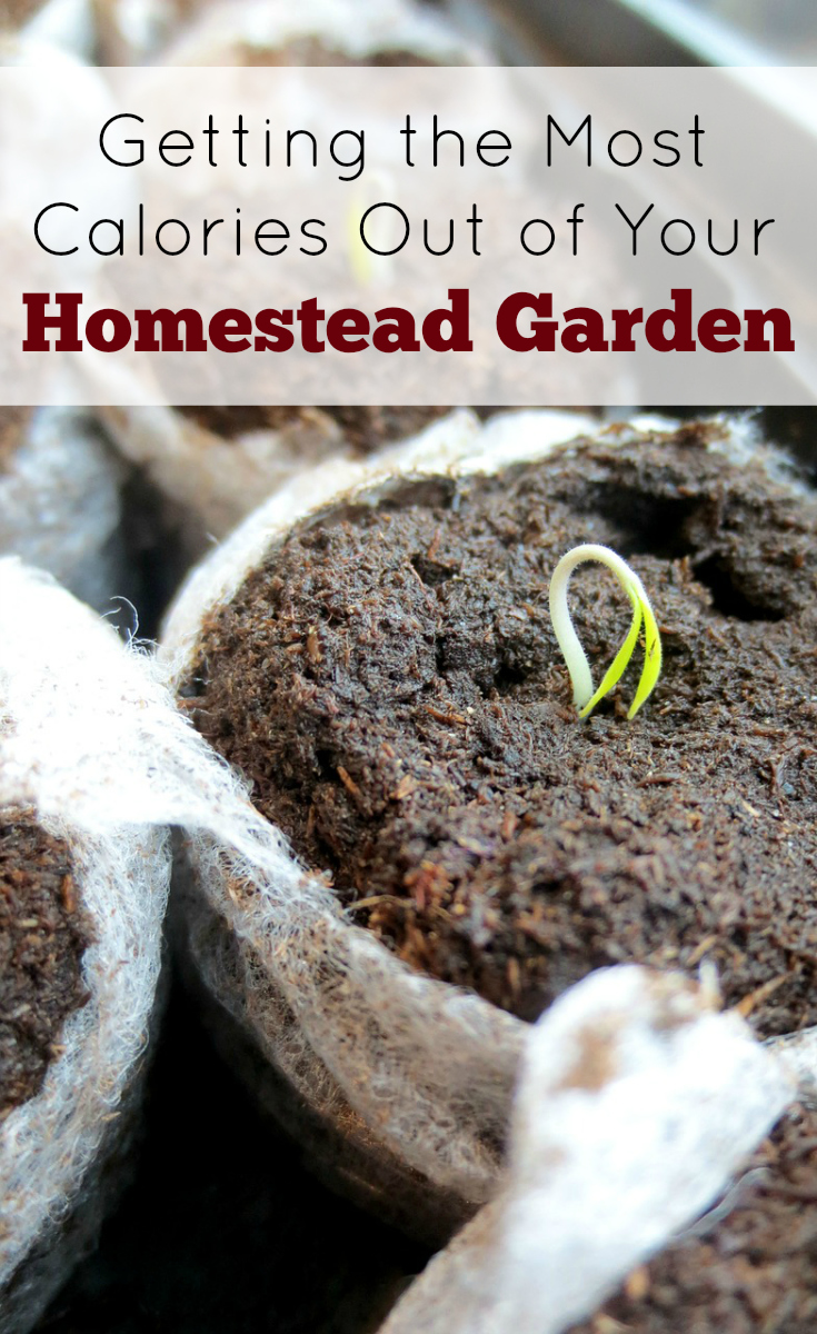 Homestead garden, vegetable garden, gardening, eat local, grow your own
