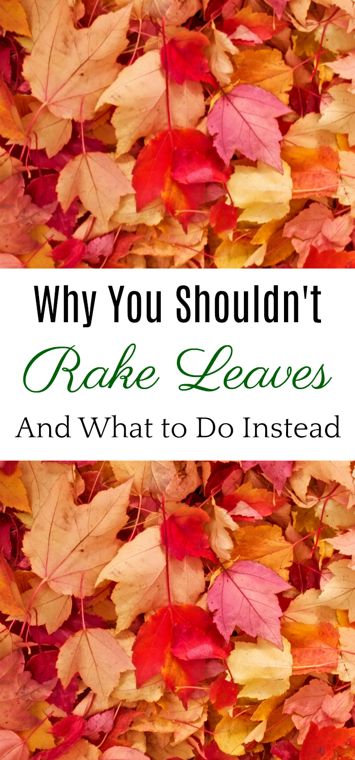Why You Shouldn't Rake Your Leaves