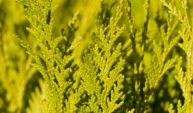 6 Foods to Avoid During Cedar Season