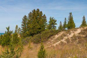 6 Foods You Should Avoid During Cedar Season