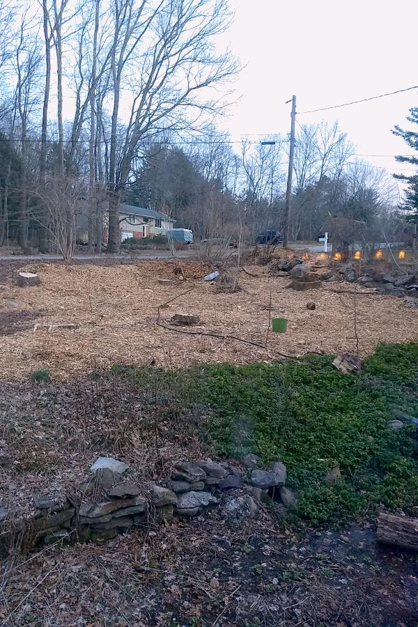 Forest garden progress picture