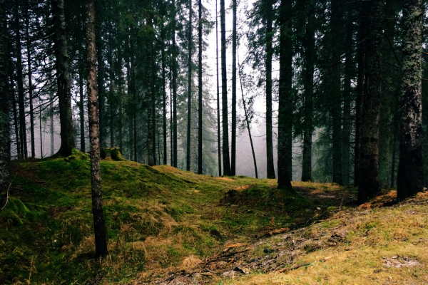 photo of forest