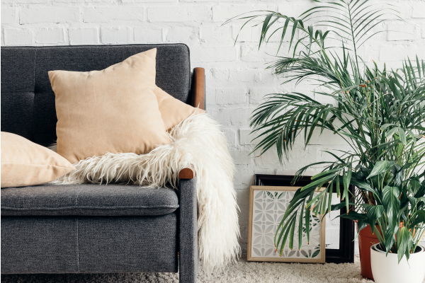 grey sofa in living room and green plant