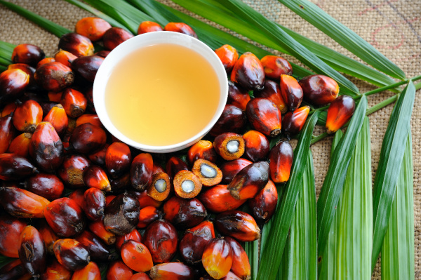 palm fruit and leaves with bowl of palm oil
